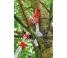 Секатор для обрезки деревьев до 40см RC-VM